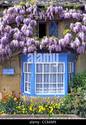 Bed and Breakfast sign with Wisteria in flower on cottage wall in the Cotswolds - Stock Photo