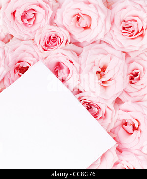 Pink fresh roses background with blank paper greeting card - Stock Photo