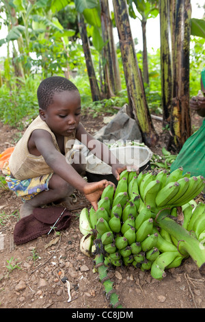 A young boy prepares to cook bananas in Masaka, Uganda, East Africa. - Stock Photo