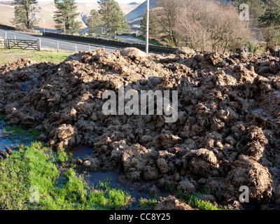 Maturing horse manure. - Stock Photo