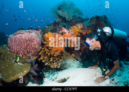 Diver on Coral reef watching a school of sweepers with soft coral  Komodo National Park, Indonesia. - Stock Photo