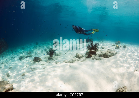 Male diver swimming over sandy bottom on shallow reef. Komodo National Park, Indonesia. - Stock Photo