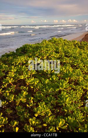 Nukolii Beach, also known as Kitchens Beach, Kauai, Hawaii. - Stock Photo