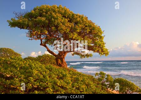 Nukoli'i Beach, also known as Kitchens Beach, Kauai, Hawaii. - Stock Photo