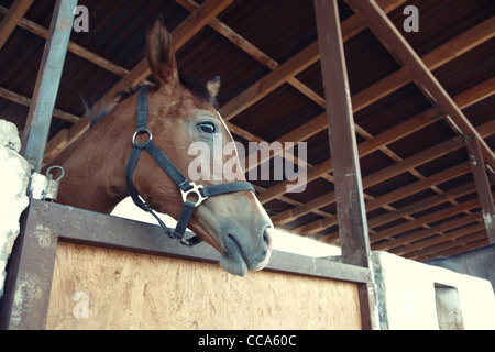 Headshot of the horse in the stable. Horizontal photo with natural light and colors - Stock Photo