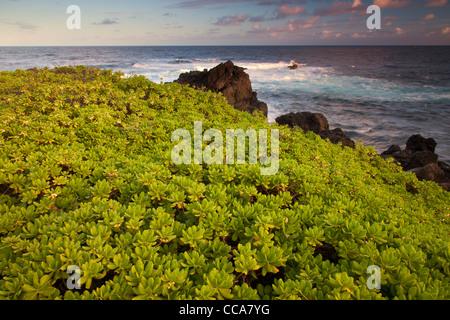 Pacific Ocean at Ohe'o Gulch - aka Seven Sacred Pools, Haleakala National Park, near Hana, Maui, Hawaii. Stock Photo