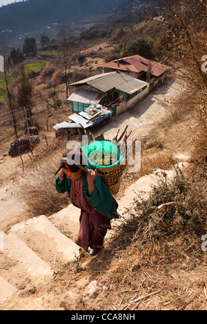India, Arunachal Pradesh, Tawang Valley, Lhou village, old woman carrying heavy load in basket - Stock Photo