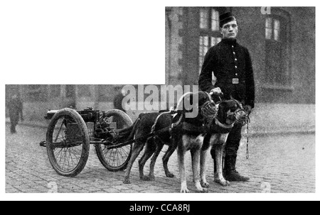 1914 Belgian dog dogs drawn machine gun waiting for its regiment novel rare photo Belgium gunner maxim harness muzzle - Stock Photo
