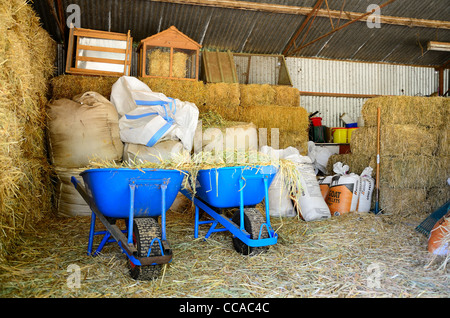 Wheelbarrows in a feed shed loaded with hay - Stock Photo