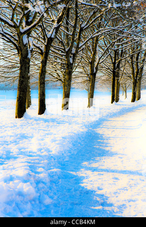 Digitally altered park scene with footpath and trees in winter. - Stock Photo