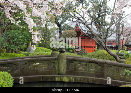 garden sakura tokyo sakura blossom in japanese garden with temple stock photo