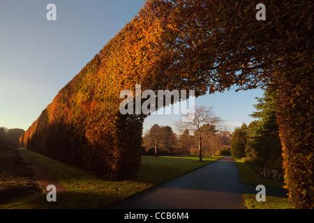Beech Hedge, Royal Botanic Garden, Edinburgh - Stock Photo