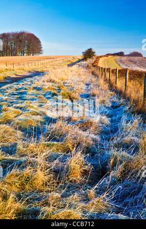 A frosty winter morning over the Ridgeway long distance path at Hackpen Hill, Wiltshire, England, UK - Stock Photo