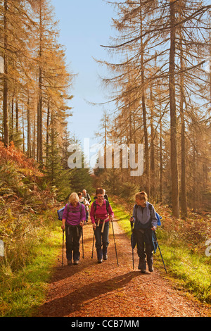 Walkers in Achray Forest near Aberfoyle - Stock Photo