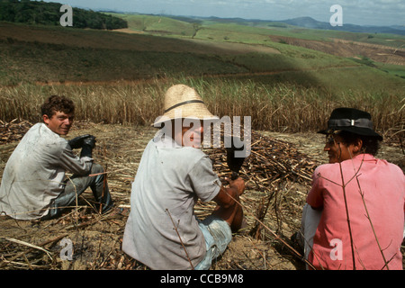 Pernambuco State, Brazil. Sugar cane workers taking a break sitting down looking over hills covered with sugar cane. - Stock Photo