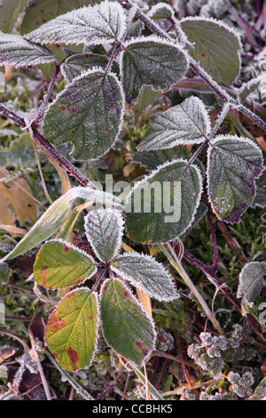 Frost covered foliage along the shore of Fewston Reservoir in Yorkshire - Stock Photo