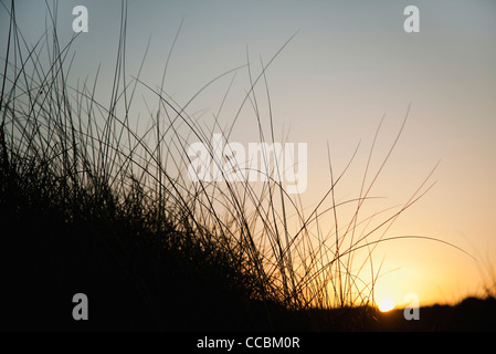 Sun setting behind tall grass - Stock Photo