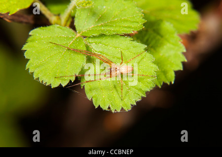 Brown spider on plant - Stock Photo