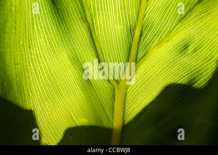 Leaf, close-up - Stock Photo