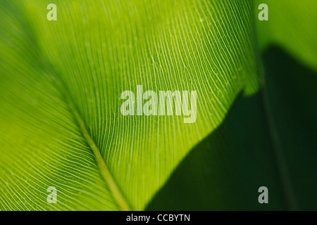 Leaf, extreme close-up - Stock Photo
