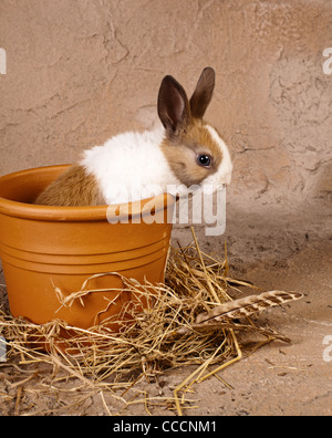 Little rabbit baby sitting in a big stone flowerpot - Stock Photo