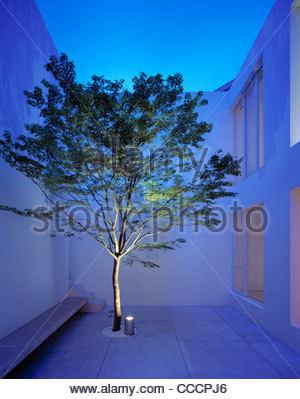 THE TETSUKA HOUSE MAPLE TREE IN COURTYARD - Stock Photo