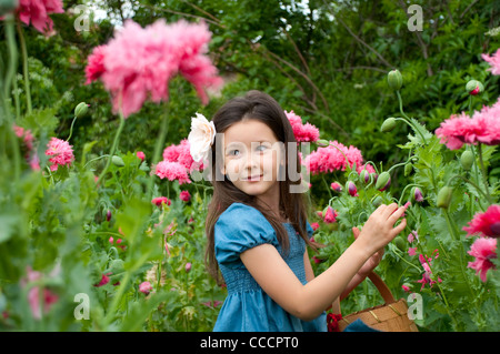 Sweet girl on the field gathers pink poppies - Stock Photo