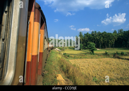 Train Intercity Express Kandy-Colombo running in paddy fields landscape, Sri Lanka - Stock Photo