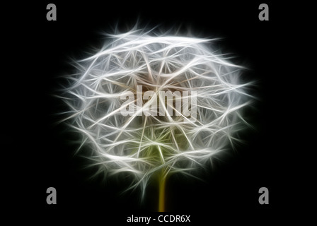 abstract dandelion, photo with graphic special effects - Stock Photo