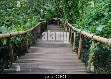 A glimpse of winter sunshine filters on to the wooden walkway through the rainforest biome in the Eden project, - Stock Photo