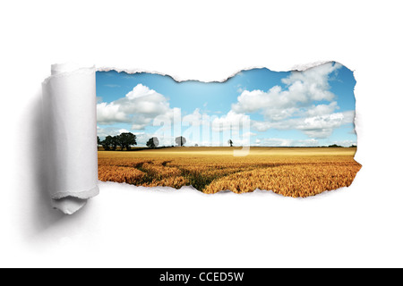 Torn paper over a summer wheat field landscape - Stock Photo