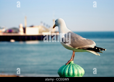 Seagull and Brighton Pier, Brighton, east sussex, england,uk - Stock Photo