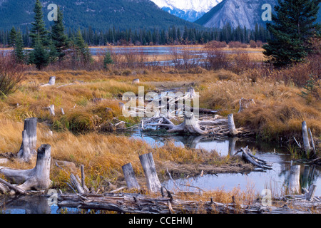 The wetlands of Vermilion Lakes are seen in the Bow River Valley in the Canadian Rockies at the foot of Mount Norquay - Stock Photo