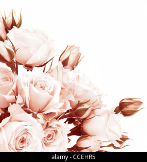 Fresh pink roses border, beautiful isolated on white flowers, corner composition, holiday rose gift, love concept - Stock Photo