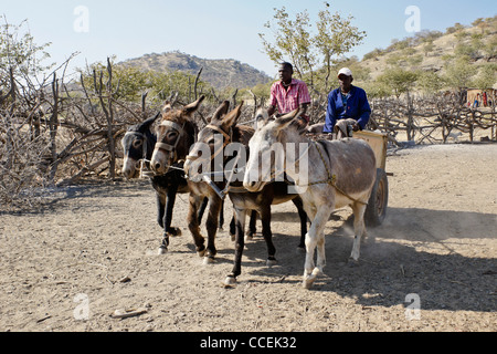 Himba men on donkey cart, Himba village near Opuwo, Namibia - Stock Photo