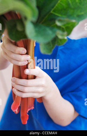 Young child holding freshly picked organic rhubarb from his garden. Perfect ingredient for a healthy, homemade pie! - Stock Photo