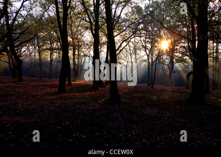 Sun shining through trees in Autumn time - Stock Photo