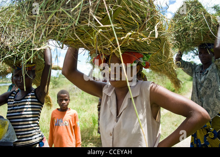A young Zambian women carrying cut grass used for thatching. - Stock Photo
