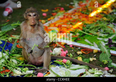 Nov. 28, 2010 - Lopburi, Thailand - A monkey eats vegetable during the annual 'monkey buffet festival' at the Phra - Stock Photo