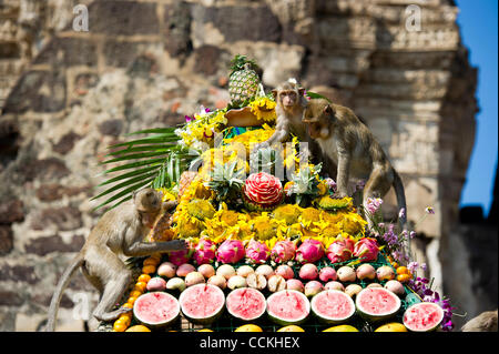 Nov. 28, 2010 - Lopburi, Thailand - Monkeys enjoy eating from pyramid made of fruit during the annual 'monkey buffet - Stock Photo