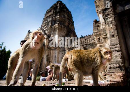 Nov. 28, 2010 - Lopburi, Thailand - Monkeys stand in front of the Phra Prang Sam Yod (The Three Crests Phra Prang) - Stock Photo