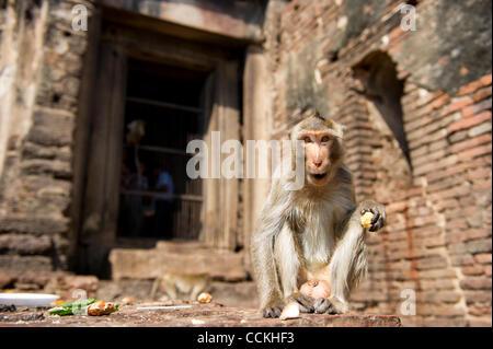 Nov. 28, 2010 - Lopburi, Thailand - A monkey sits in front of the Phra Prang Sam Yod (The Three Crests Phra Prang) - Stock Photo