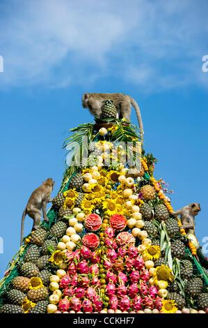 Nov. 28, 2010 - Lopburi, Thailand - Monkeys climb a pyramid made of fruit during the annual 'monkey buffet festival' - Stock Photo