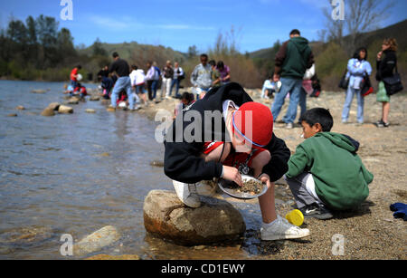 OUTBOUND LEDE --  Miles Nowack, 10, a 4th grader at Genevieve Didion School, pans or gold at the Marshall Gold Discovery - Stock Photo