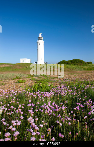 Wildflowers in front of Hurst Point Lighthouse, Hampshire, England. Spring (May) 2011. - Stock Photo