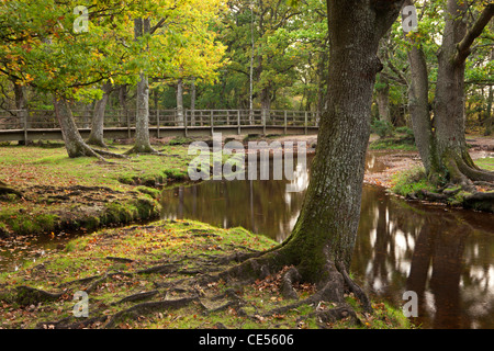 Ober Water flowing through autumnal trees at Puttles Bridge, New Forest, Hampshire, England. Autumn (October) 2011. - Stock Photo