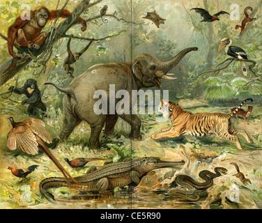 Various wild animals South East Asia. Publication of the book 'Meyers Konversations-Lexikon', Volume 7, Leipzig, - Stock Photo