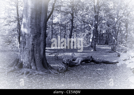 Monochrome image of forest with sunshine in late summer - Stock Photo