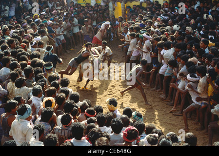 Bull taming festival ; Jallikattu ; Tamil Nadu ; India - Stock Photo