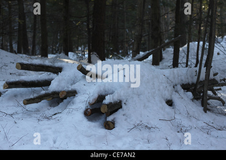 Pile of cut logs covered in snow - Stock Photo